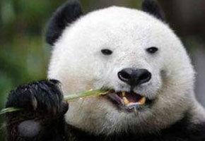 """注意这几点,告别""""熊猫眼"""""""