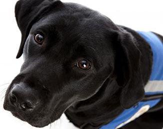科普大篷车-170:驯养导盲犬