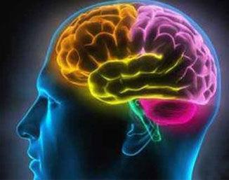《赛老师》09集:人类了解自己的大脑吗