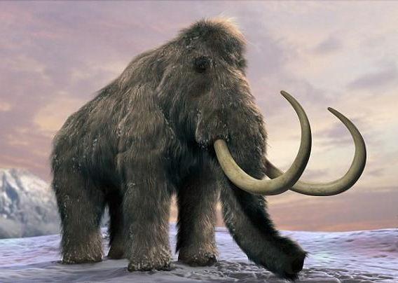 猛犸象还能复活吗?