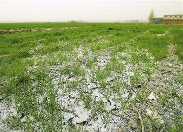 过量使用化肥有什么危害