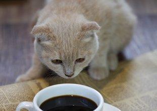 猫屎咖啡 关我喵事?
