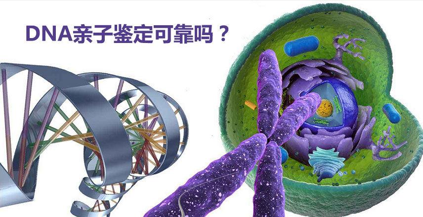 DNA亲子鉴定可靠吗