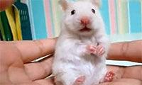为什么科学家用小动物做实验?