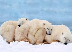 探秘南北极