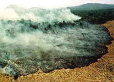大漠风沙哺育亚马逊森林