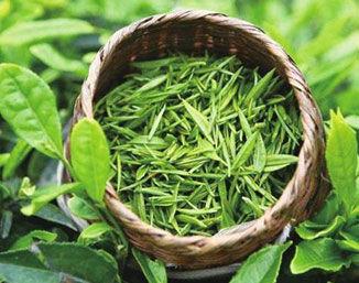 茶叶为什么好喝?基因图谱为你解答