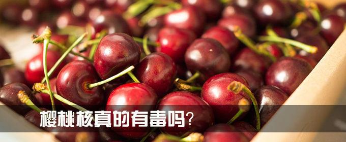 樱桃核真的有毒吗?