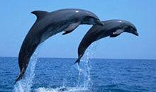 酷杰 第三季09:搁浅的海豚