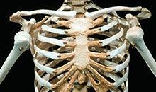 酷杰 第四季08:有生命的骨头