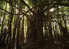 被大漠风沙哺育的亚马逊森林