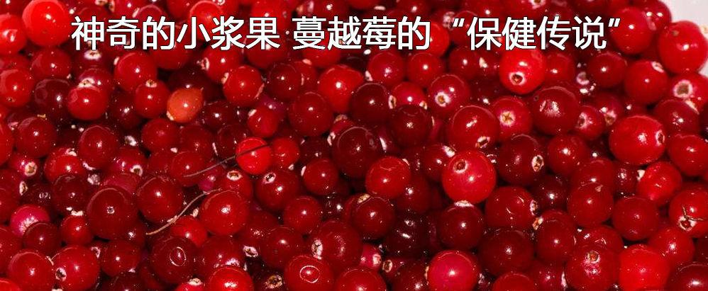 """神奇的小浆果 蔓越莓的""""保健传说"""""""