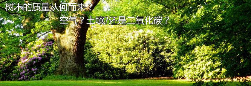 真理元素-20:树木的质量从何而来