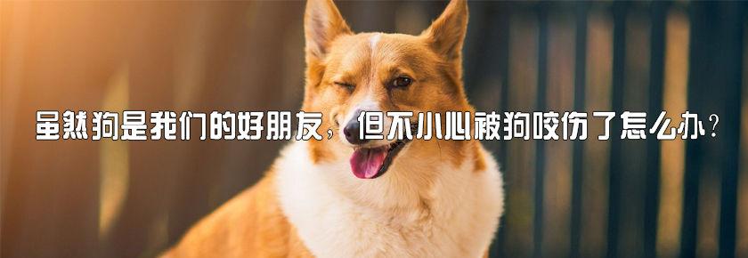 虽然狗是我们的好朋友,但不小心被狗咬伤了怎么办?