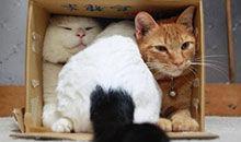 猫咪为啥爱钻纸箱咬数据线?