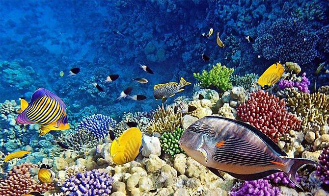 为什么要保护生物多样性?