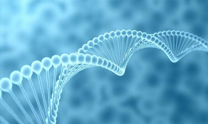 DNA是如何传递生物信息的?