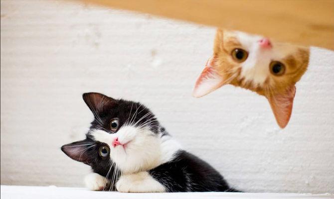 猫咪睡觉时为什么把身体蜷成团?