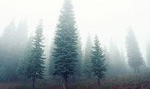 防治雾霾 请爱护森林