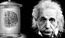 回到2049:解剖爱因斯坦的大脑