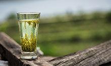 识物园-绿茶 营养知多少