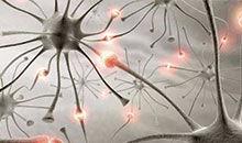 PBS:镜像神经元是什么