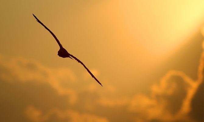光线让鸟儿更帅气