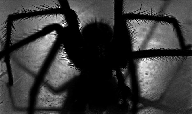 什么是蜘蛛恐惧症