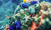 NASA:探索火山,珊瑚礁和雪堆