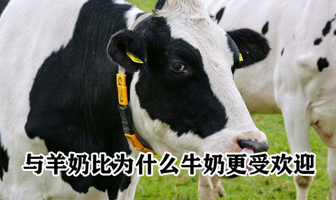 与羊奶比为什么牛奶更受欢迎