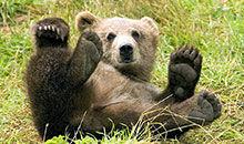 真好看-熊