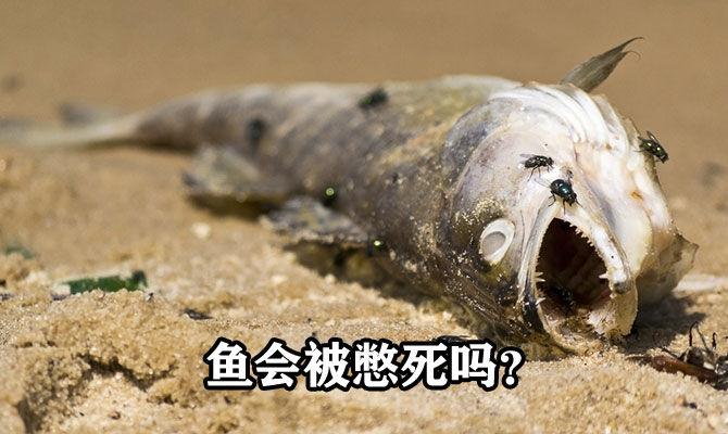 鱼会被憋死吗?了解鱼的呼吸方式