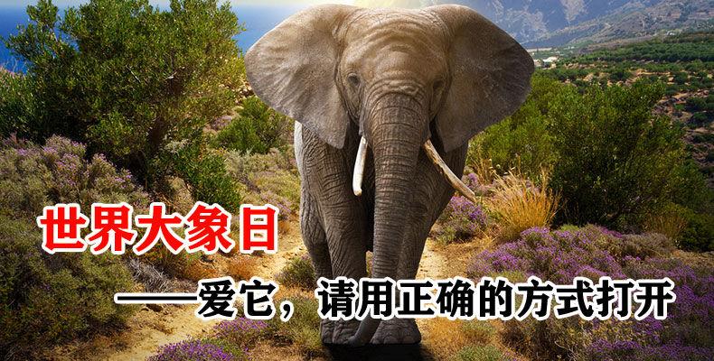 保护大象:爱它,请用正确的方式打开