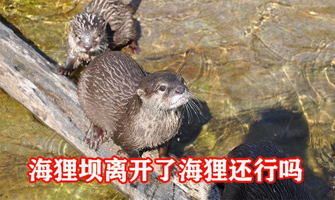 海狸坝离开了海狸还行吗