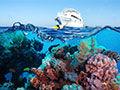 珊瑚的颜色从何而来