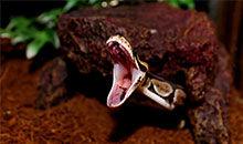被蛇咬后应该怎么办?