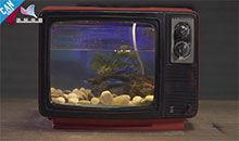 工匠实验室:复古电视水族箱