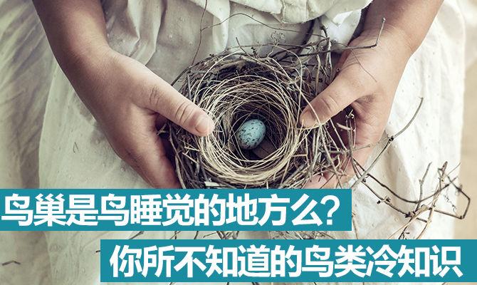 《好兔为什么》06:鸟巢是鸟睡觉的地方么?你所不知道的鸟类冷知识