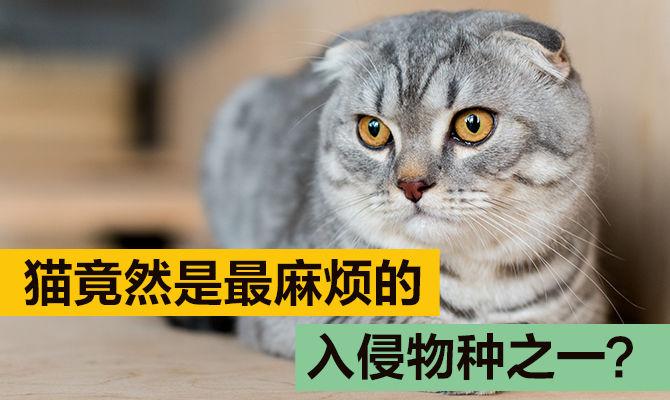 猫竟然是最麻烦的入侵物种之一?