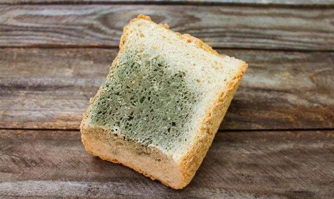 疫情期间屯粮面包发霉怎么办?
