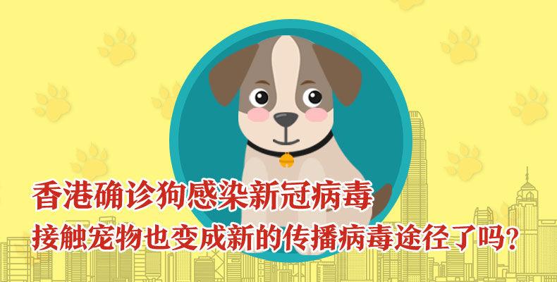香港确诊狗感染新冠病毒接触宠物也变成新的传播病毒途径了吗?