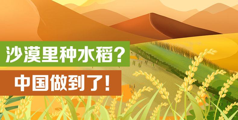 沙漠里种水稻?中国做到了!