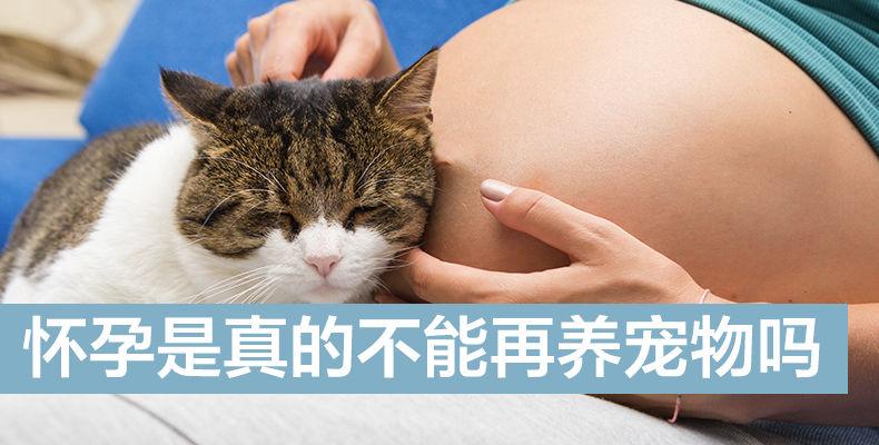 怀孕是真的不能再养宠物吗