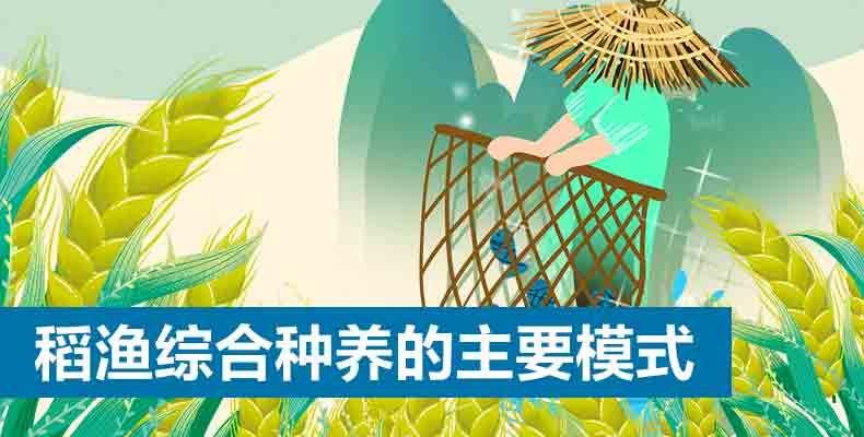 稻渔综合种养的主要模式(1)
