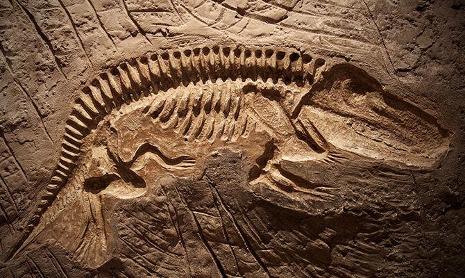 用化石揭示古生物的奥秘