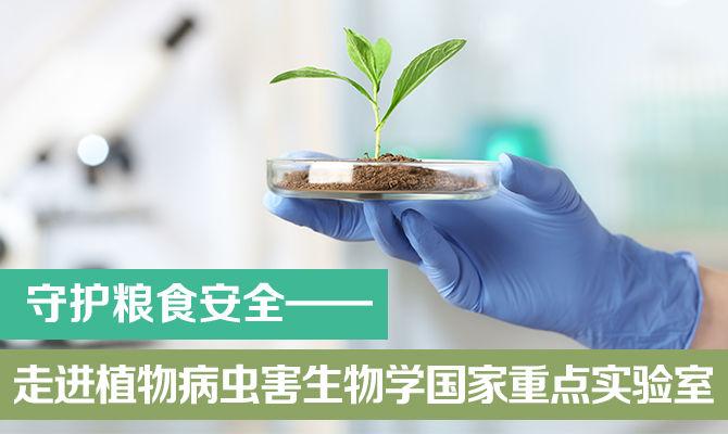 守护粮食安全 走进植物病虫害生物学国家重点实验室