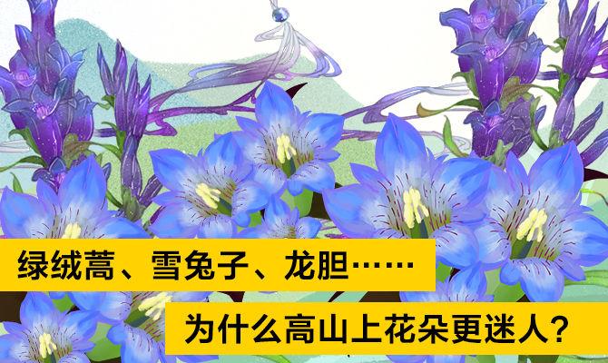 我是科学家-绿绒蒿、雪兔子、龙胆……为什么高山上花朵更迷人?-顾有容