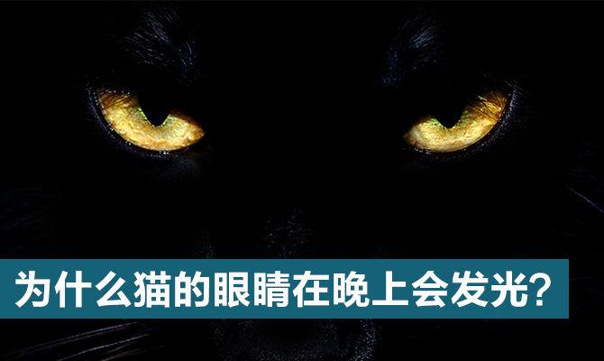 为什么猫的眼睛在晚上会发光?