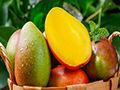 芒果有哪些营养价值?