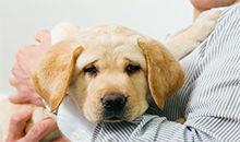 狗为什么能嗅出癌症?